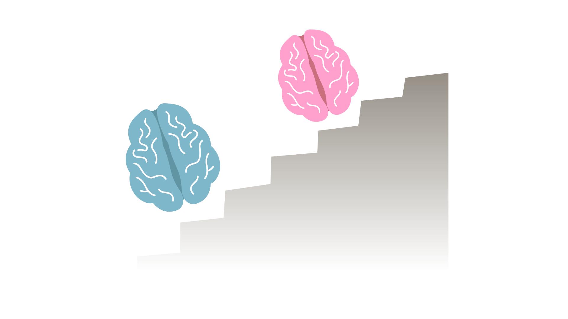 hjerneudvikling.png