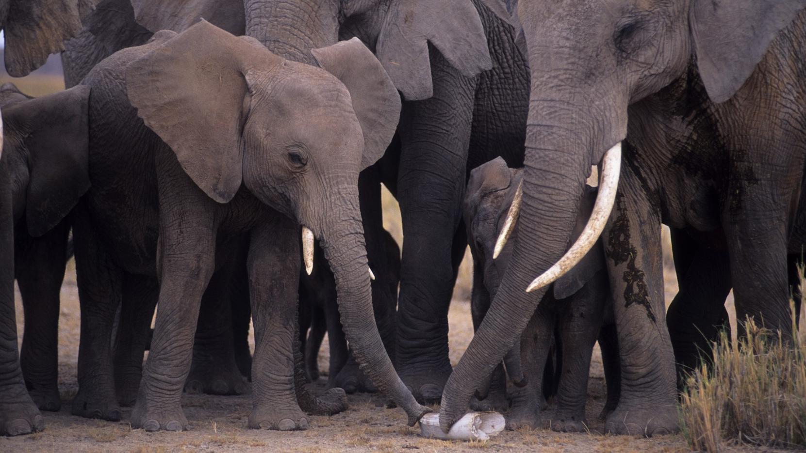elephants_01_0.jpg