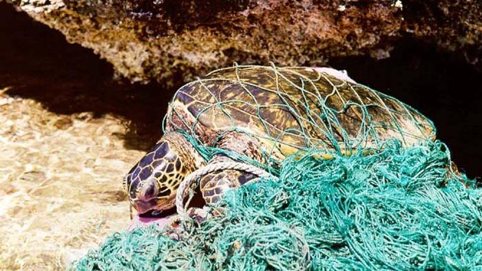 turtle_entangled_in_marine_debris_ghost_net.jpg