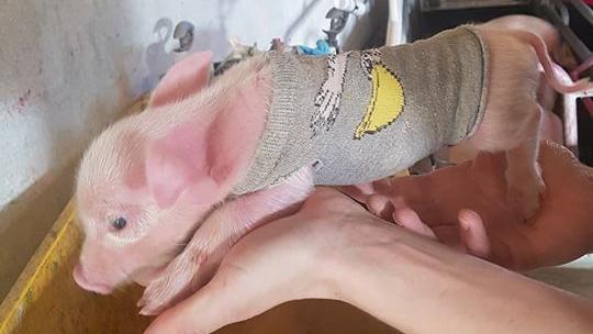 grisesweater.jpg