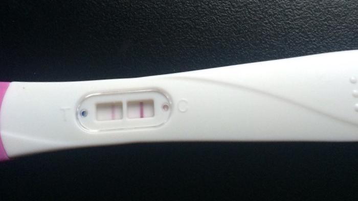 gravid.jpg