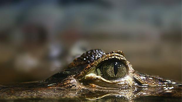 krokodille.jpg