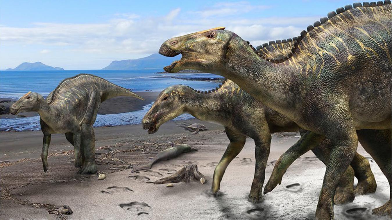 kamuysaurus-japonicus