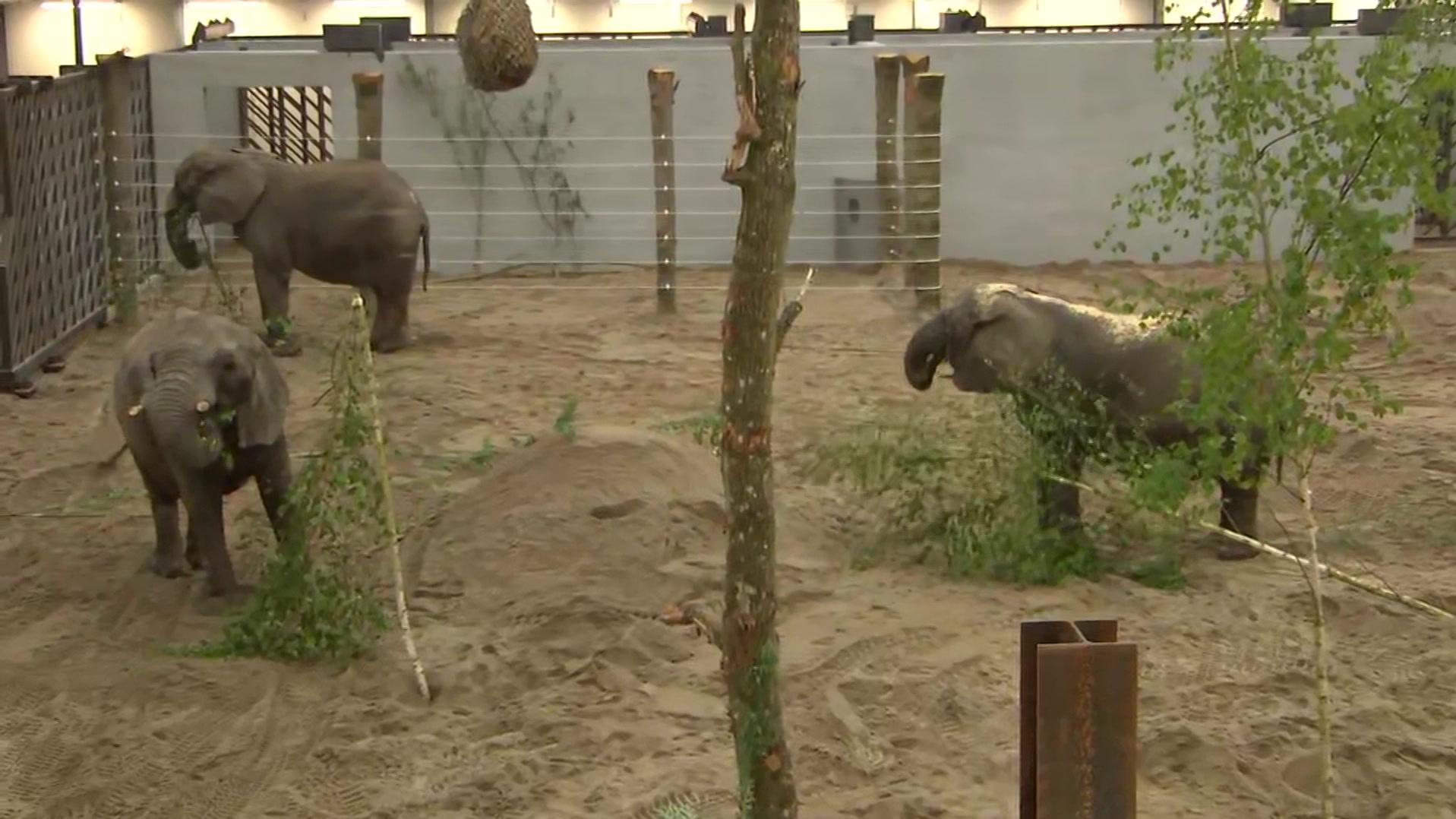 julw_a_indland_elefanter-12.26.29.06.jpg