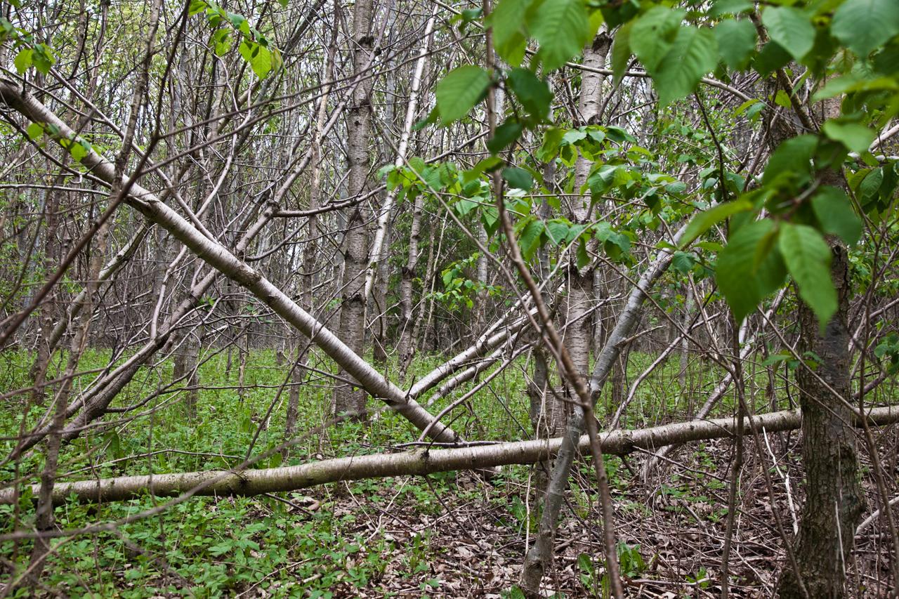 #86AD1E Dette års BILLEDSERIE På Opdagelse I En Ungdommelig Skov Viden DR Gør Det Selv Haven Bog 5341 12808535341