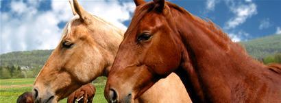 hest.jpg