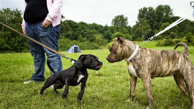kamphund.jpg