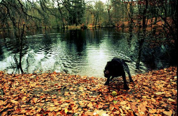 efterayr_mikkel_hendeliowitz_billede_af_hunden_anton.jpg