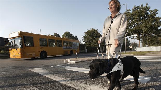 Dansk blindesamfund førerhundeordningen