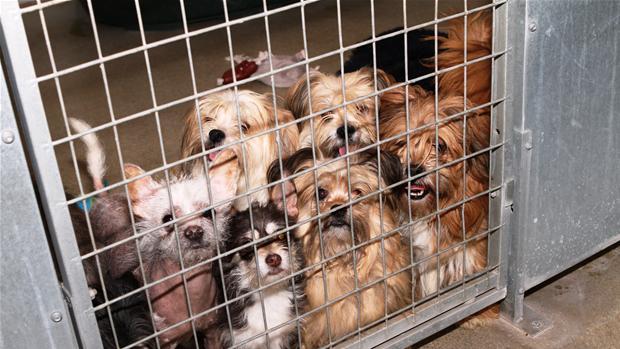 hund fra dyreinternat