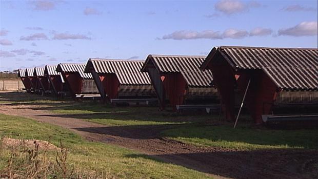 minkfarmny.jpg