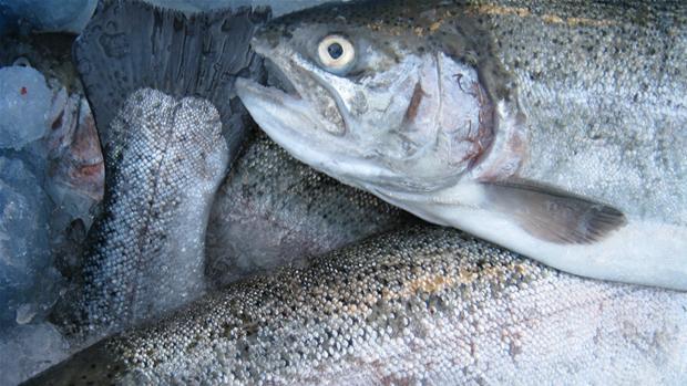fisk-066.jpg