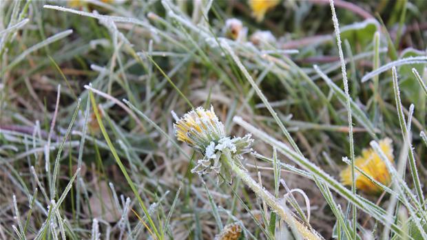 frost_1_1.jpg