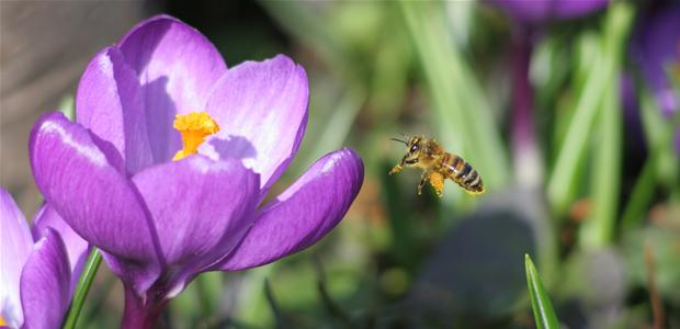 bi_og_blomst.jpg