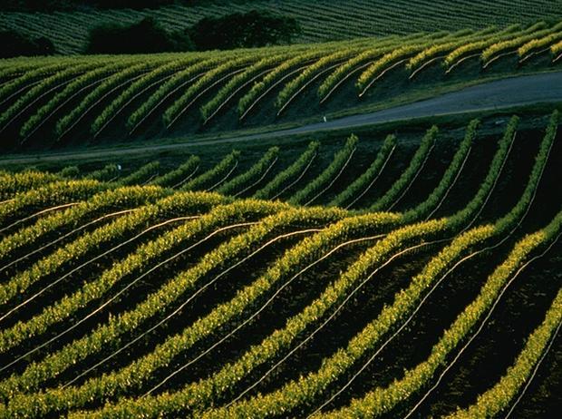 vinmarker.jpg