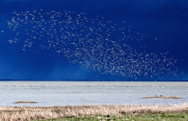 Det store fugletræk