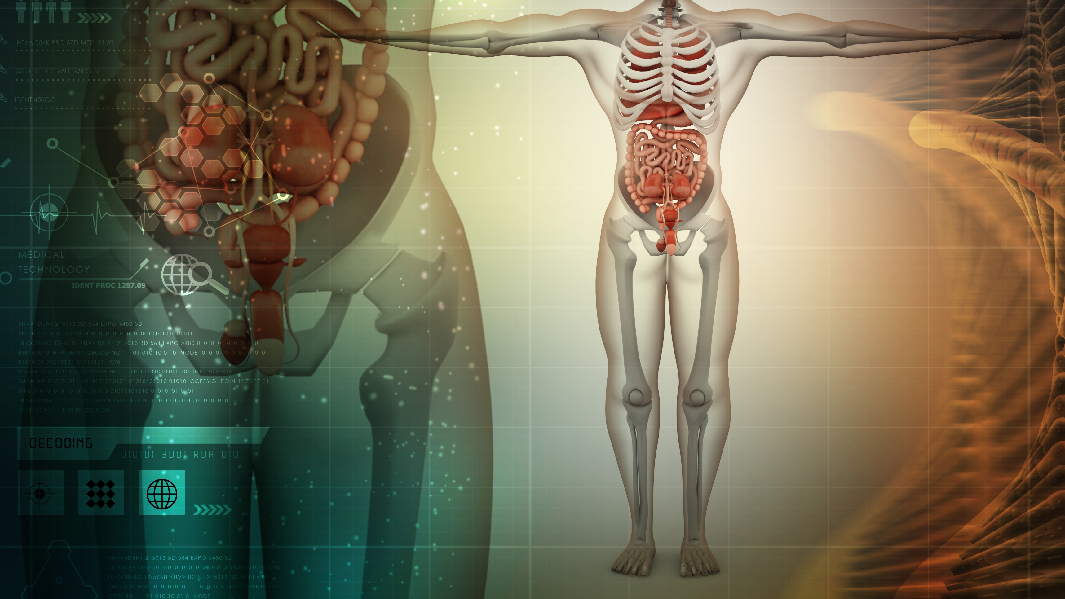 anatomi.jpg