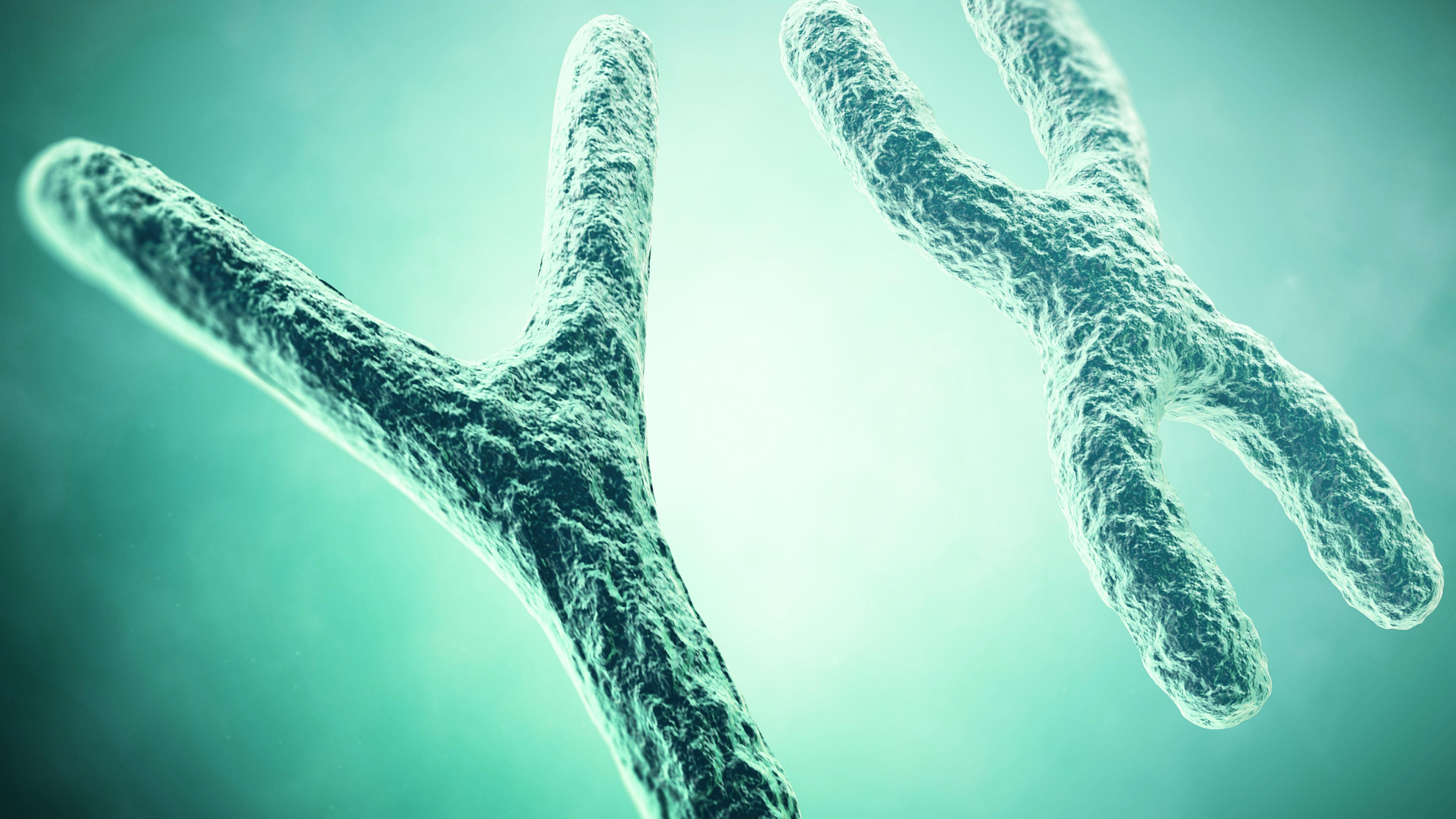 kromosomer.jpg