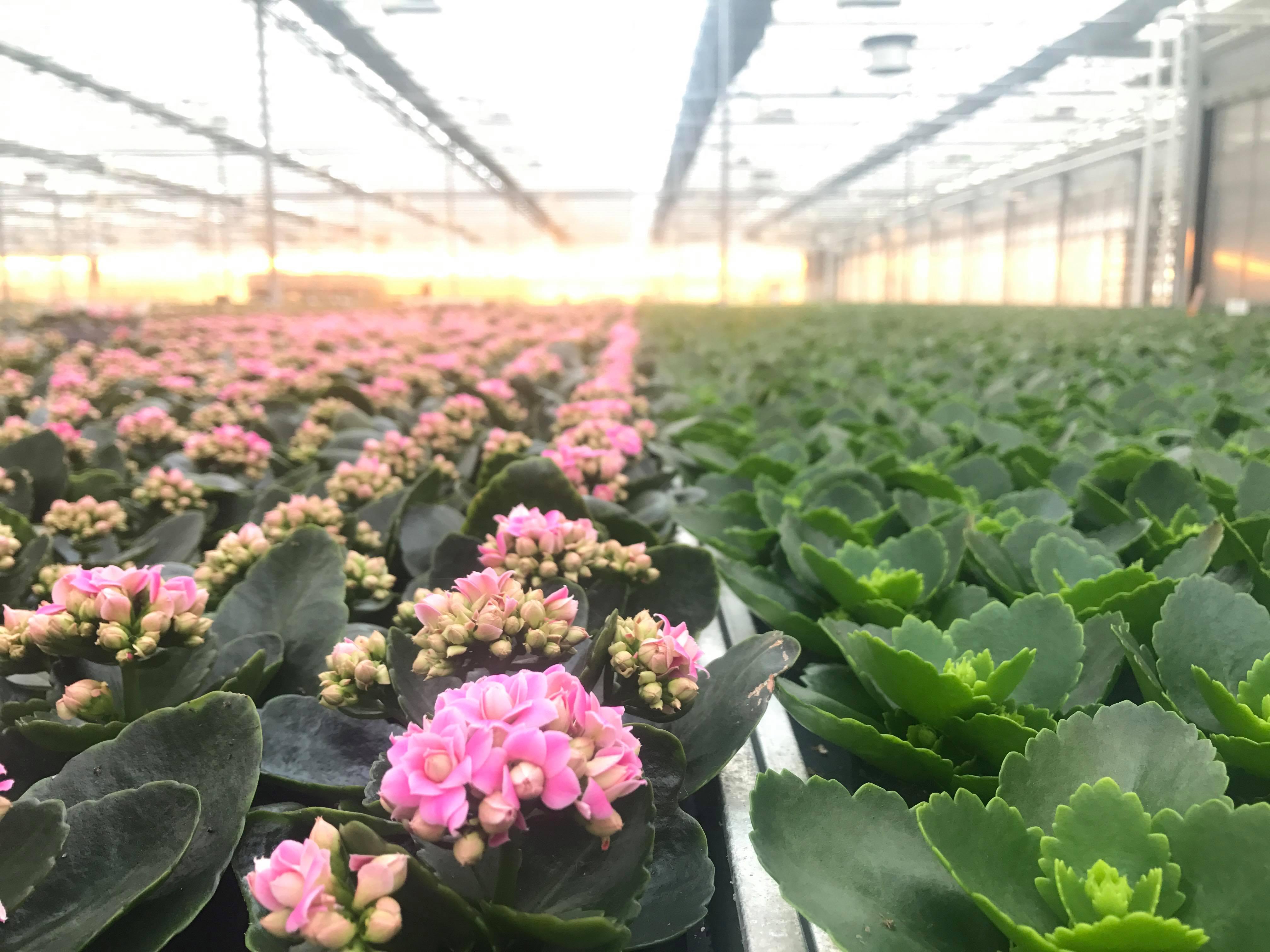 byGrowers planter.jpg