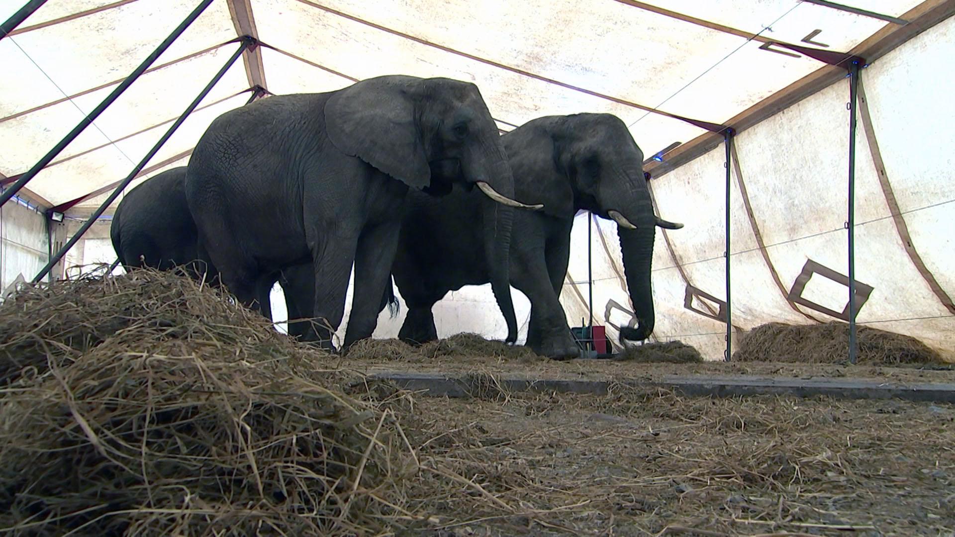 elefanter_0.jpg
