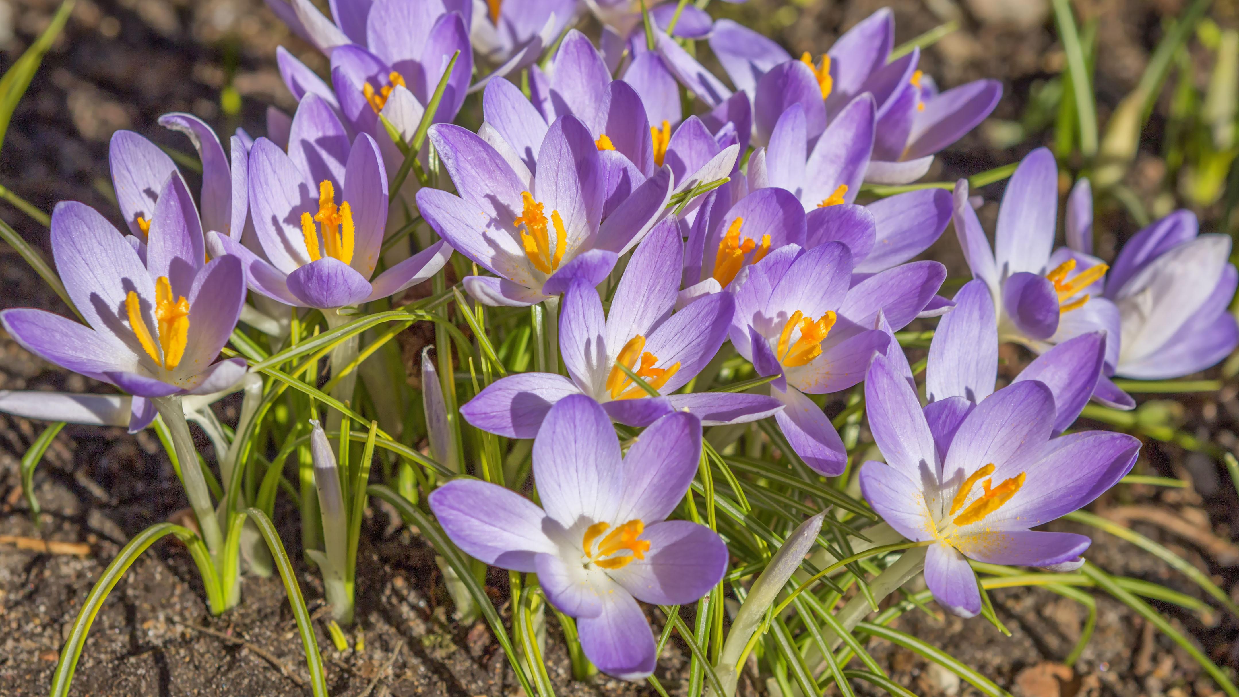 blomster_bader_i_solskin.jpg