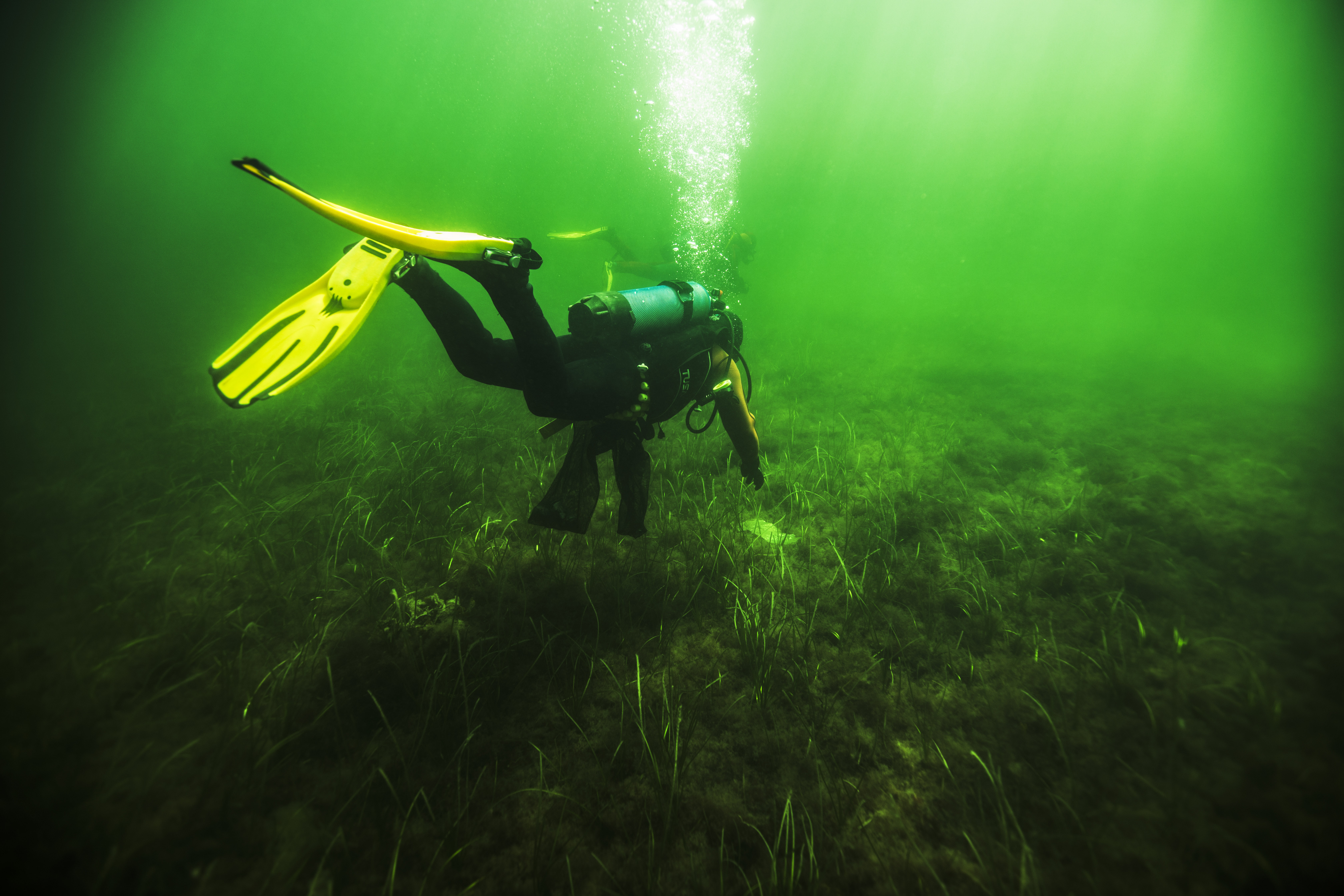 Dykker efter skrald
