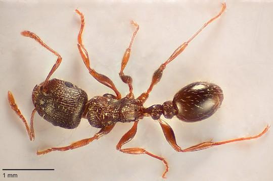 myren.jpg