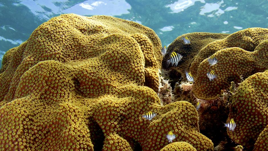 koraller.jpg