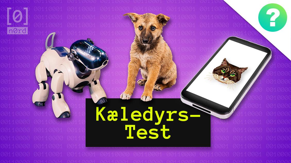 app-dyr-quiz.jpg