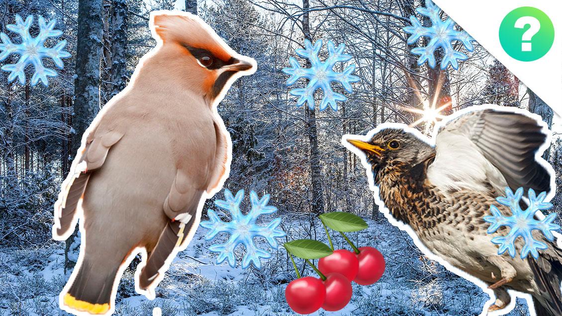 vinterfugle.jpg