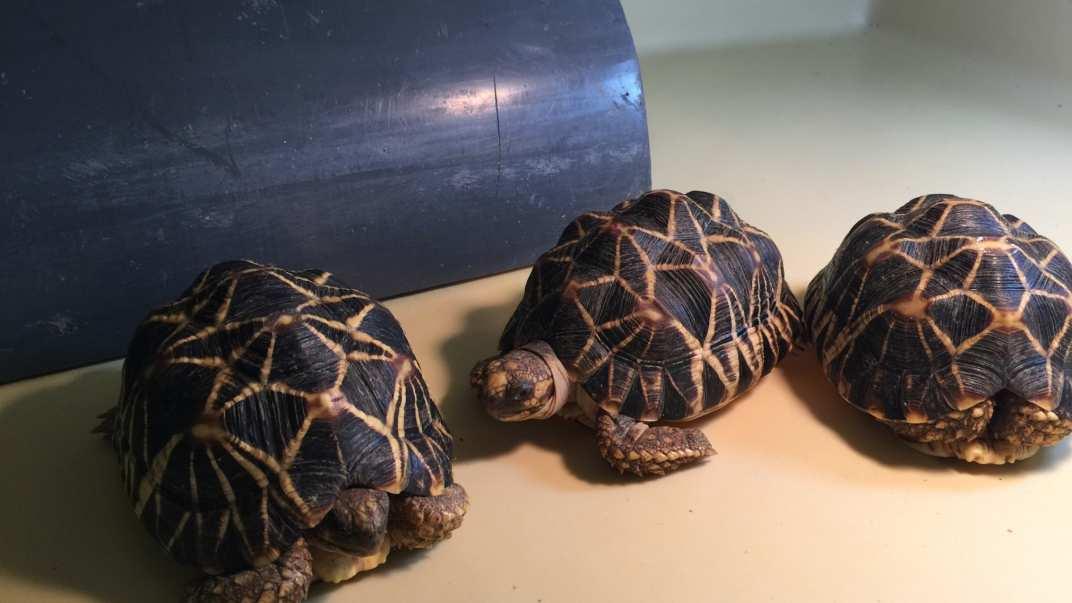 skikdepadder.jpg