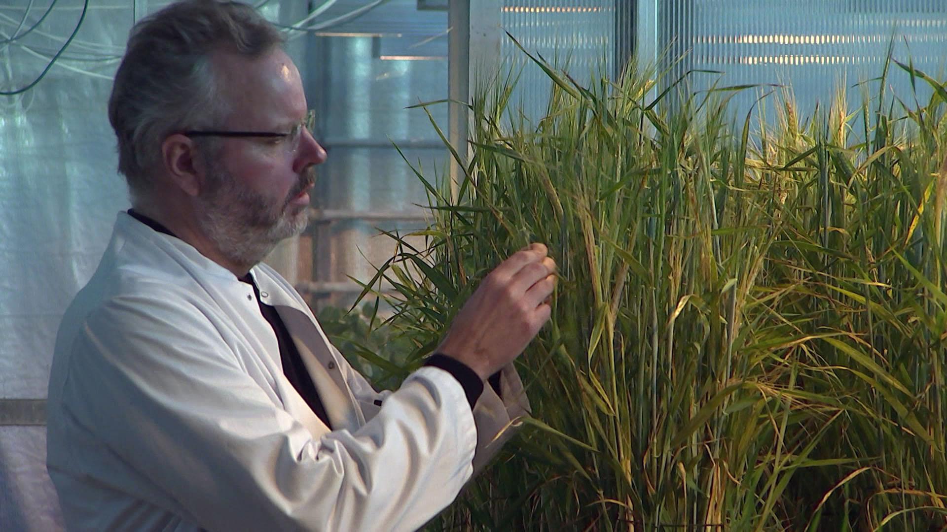 Professor Henrik Brinch-Pedersen, Aarhus Universitet.