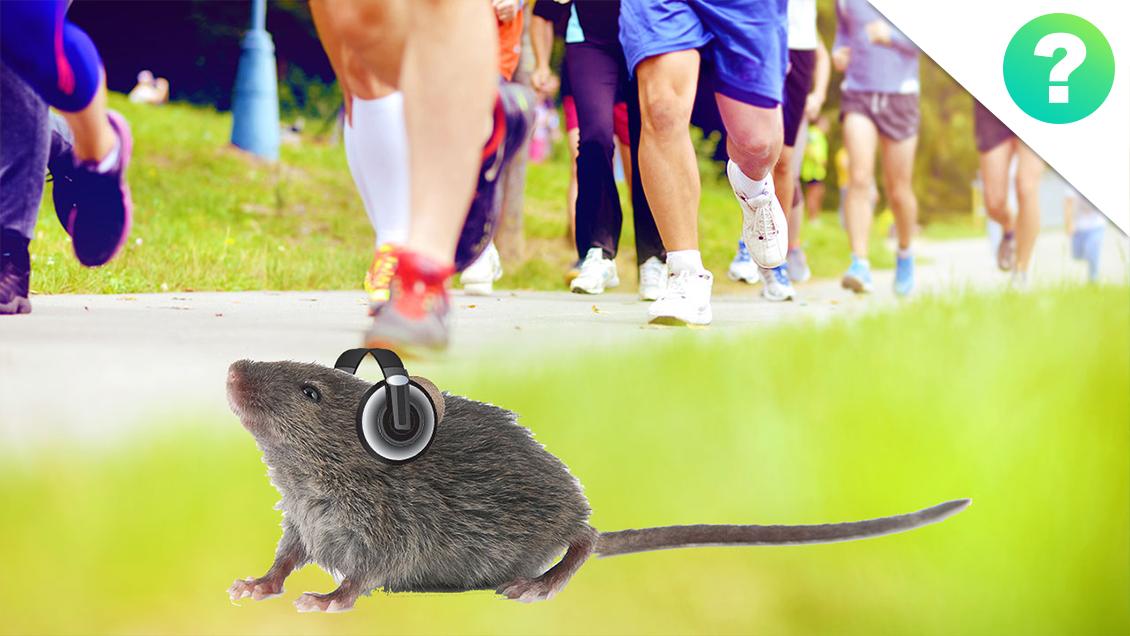 mus-og-motion-spot.jpg