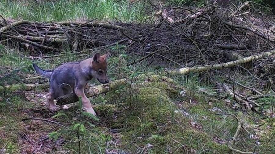 ulve.jpg
