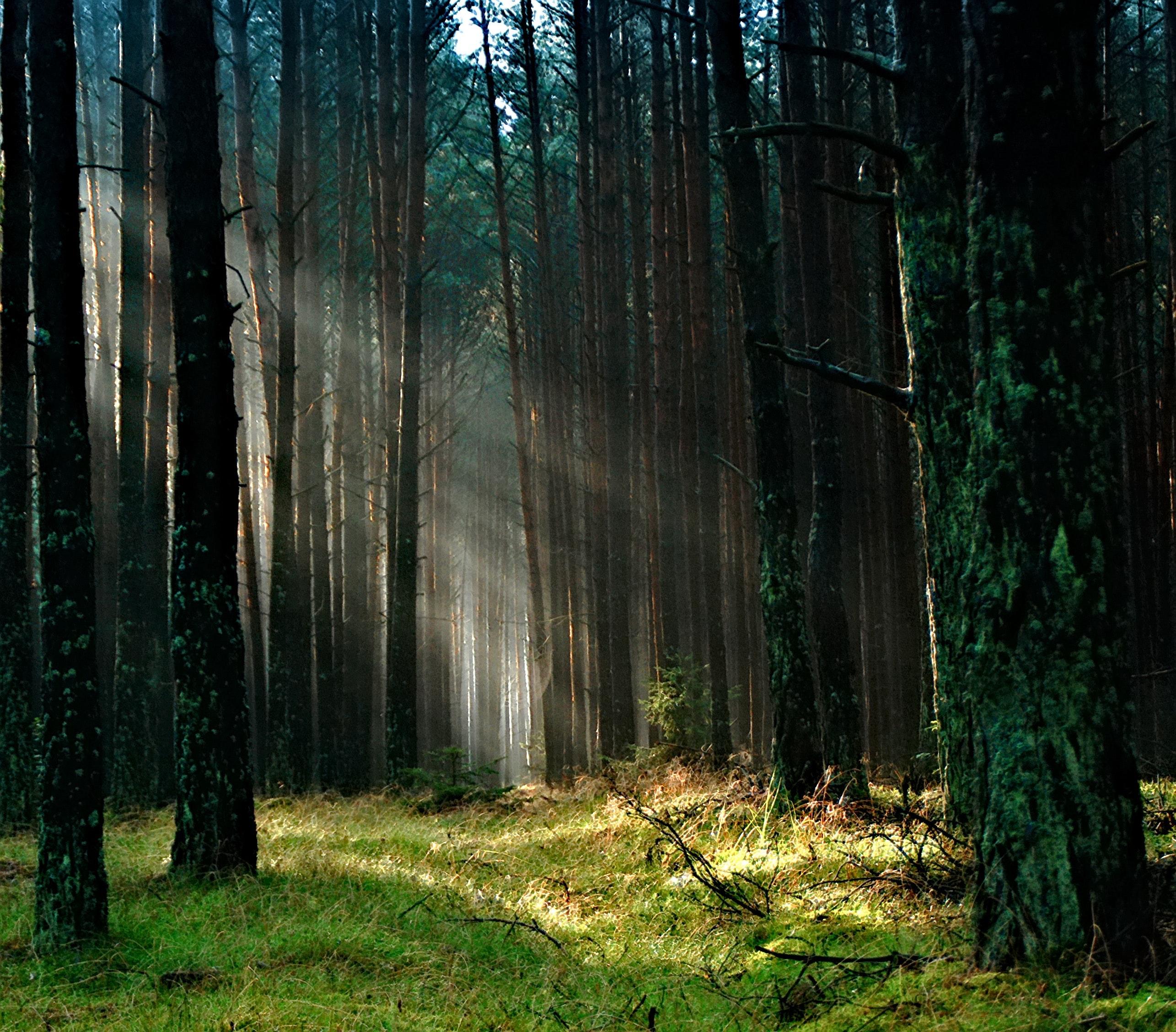 forest-grass-nature-158251.jpg