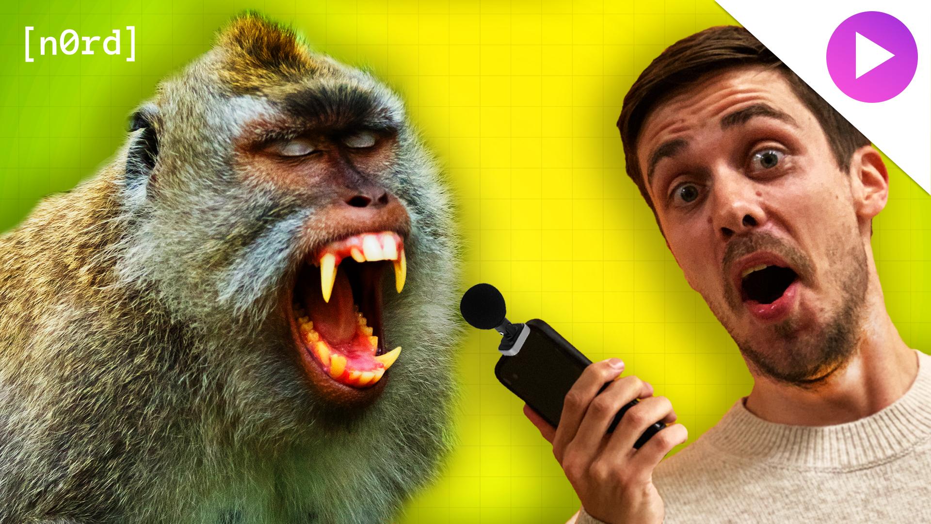noerd_dance_monkey_drupal_v2.jpg