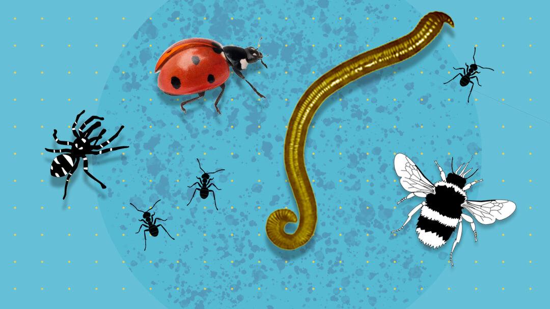 4_fase1_mellem_hvad_er_biodiversitet_red.jpg