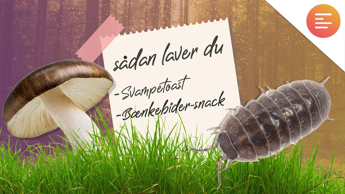 dyre-snacks_1.jpg