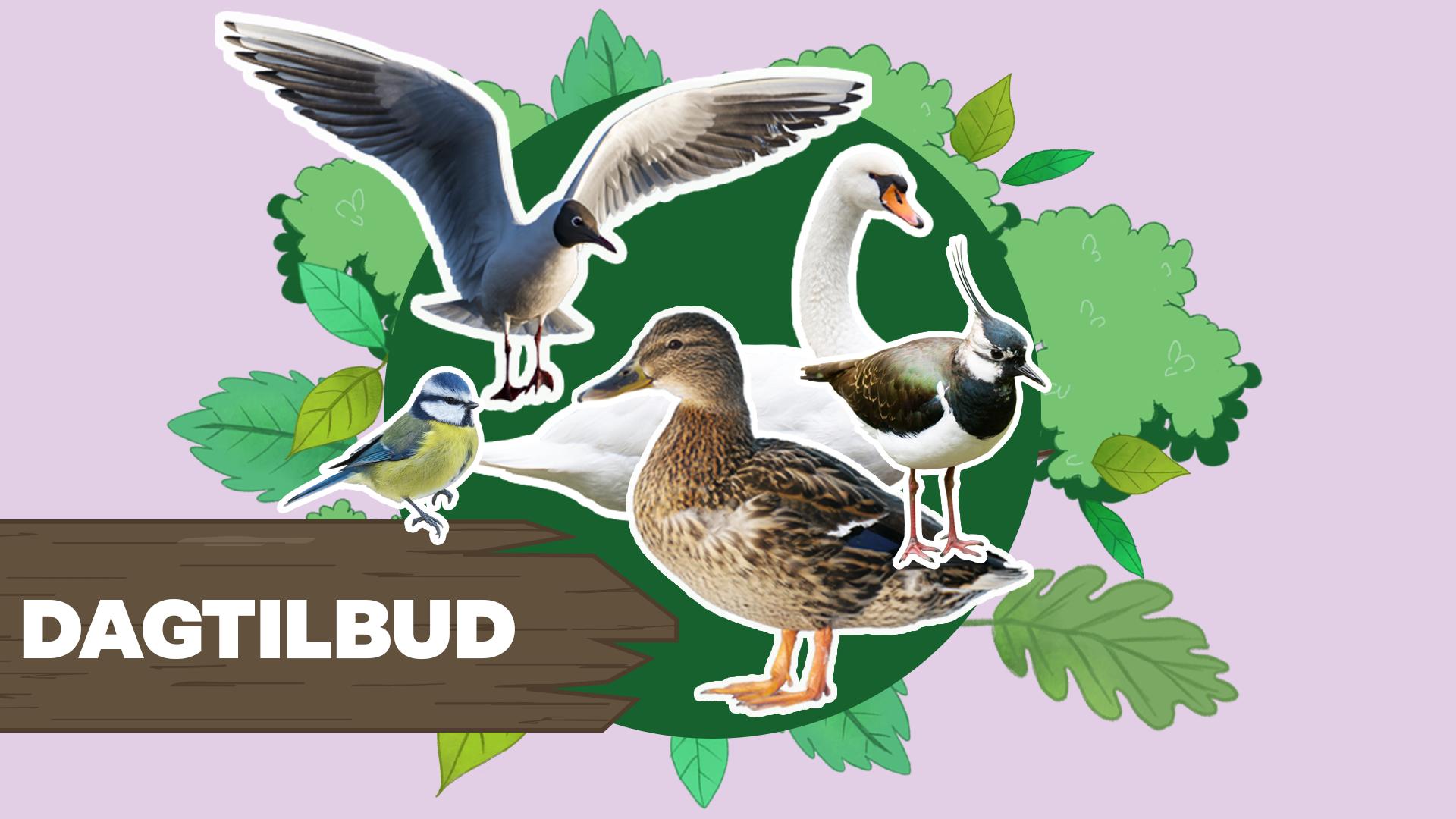 Ramasjang Redder Fuglene