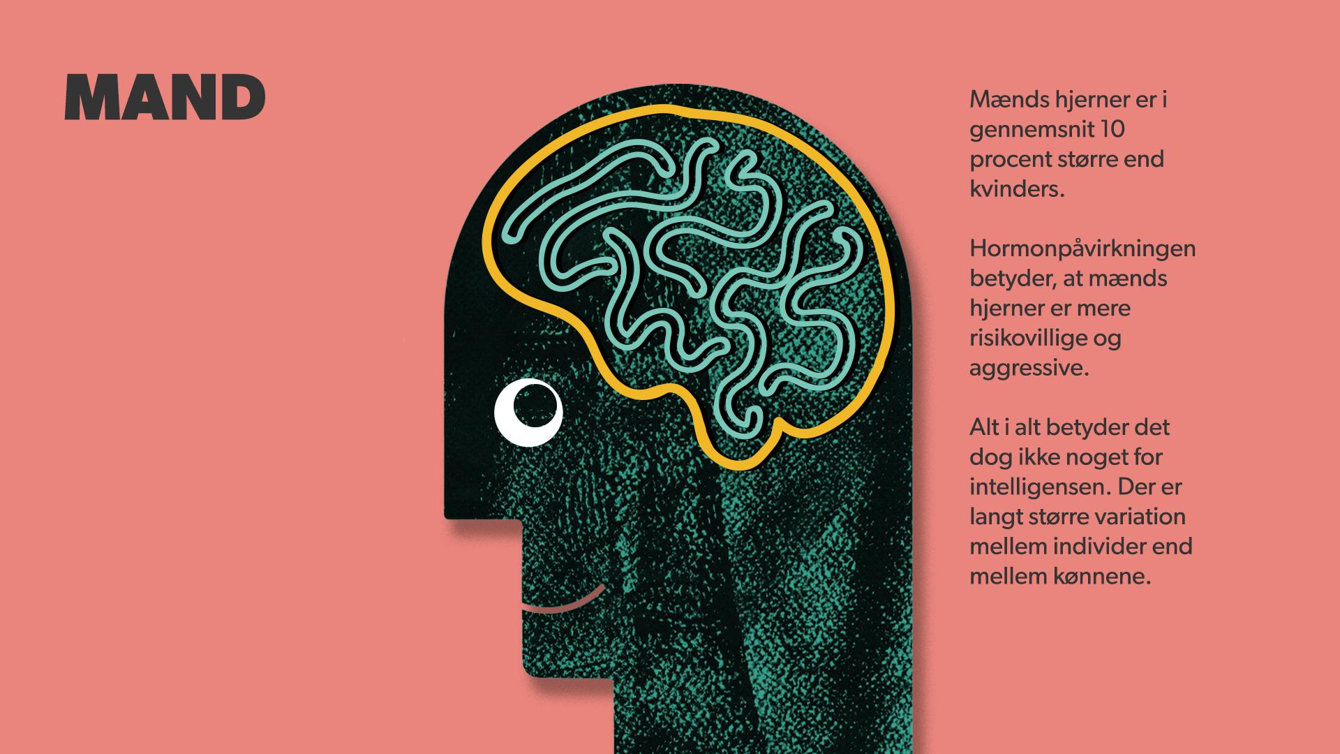 91b972d6bae9 Mænd har større hjerner end kvinder