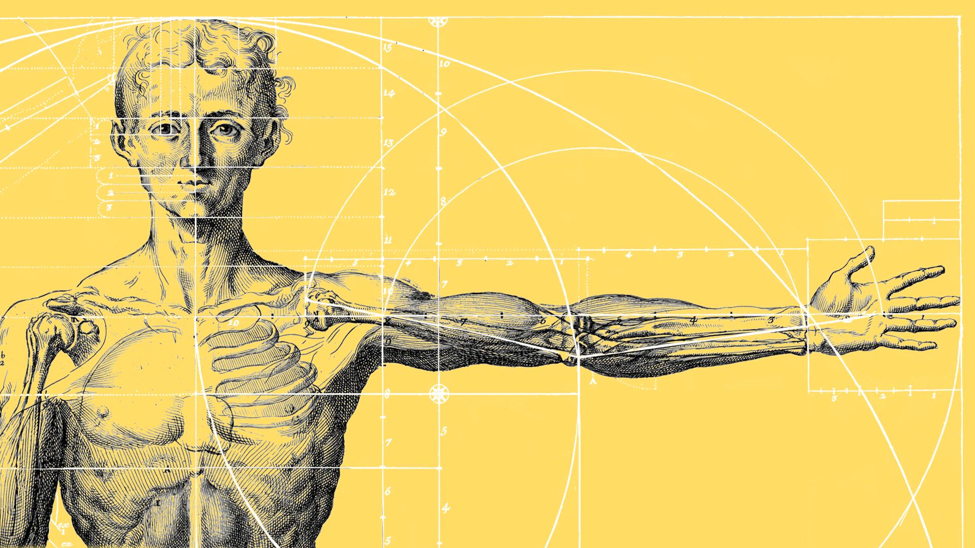 Du er et af de mest udholdende dyr på kloden: Beviserne ligger gemt i din utrolige krop